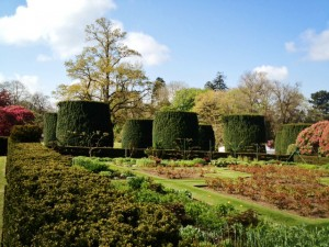 Yews Trees in Hillsborough Gardens