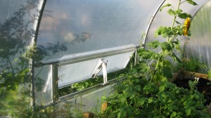 Polytunnel ventilation for blog