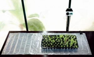 Heat Mat with Plants