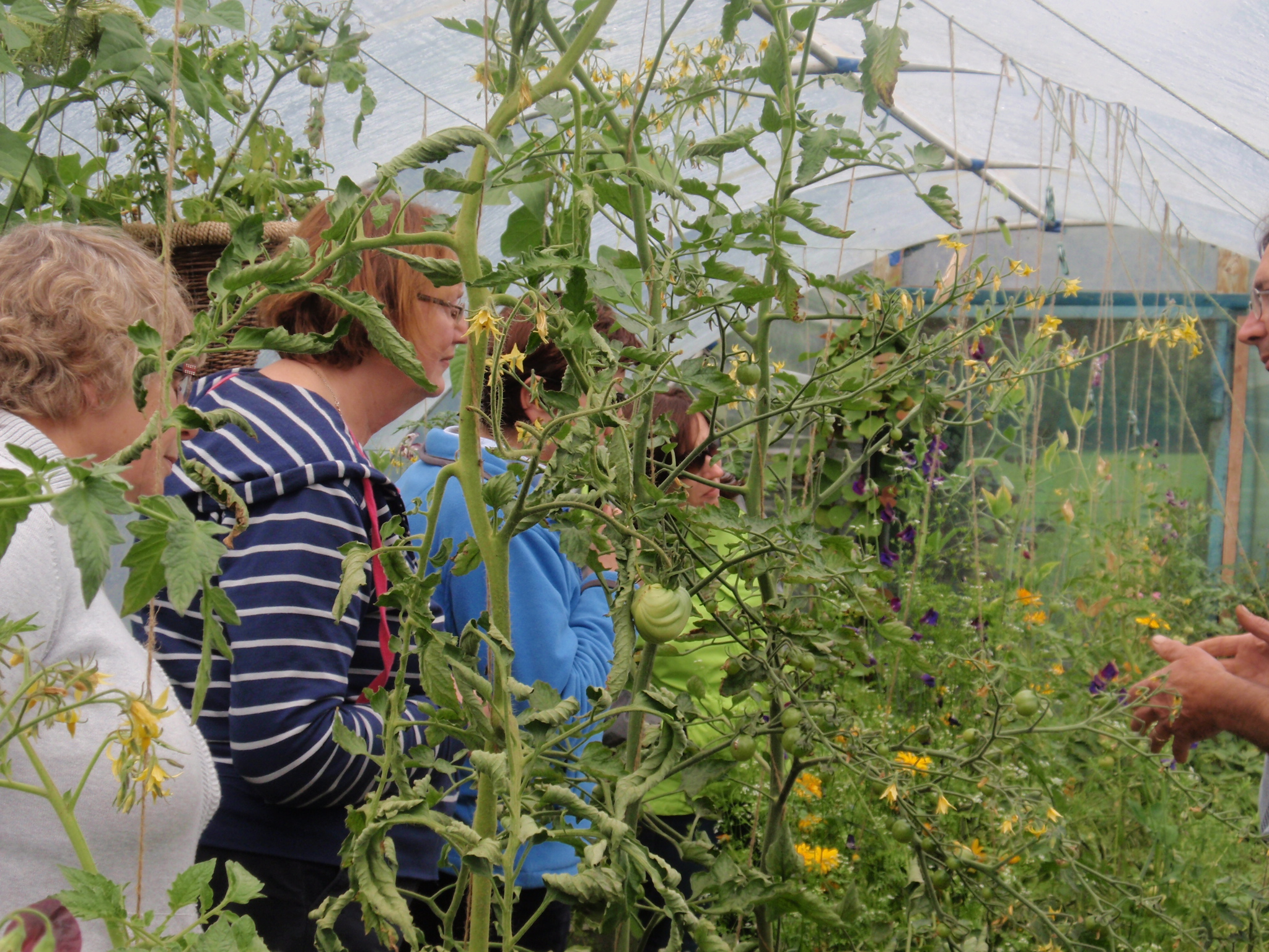 Polytunnels | Polydome