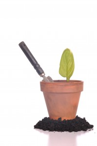 young plant on pot with trowel on soil as a gardening concept (isolated on white background)
